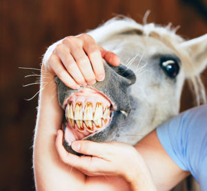 Horse Dental Care - Placer County