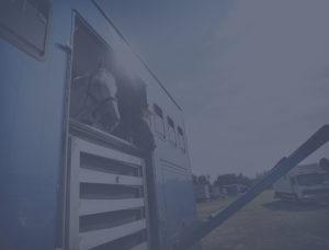horses-in-trailer